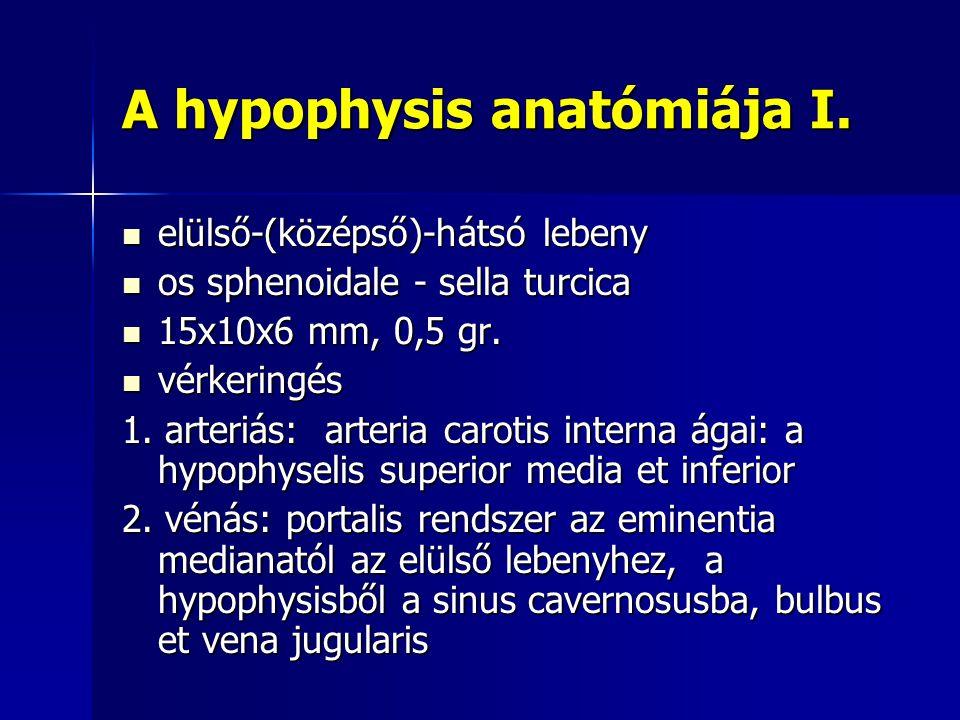 A hypophysis anatómiája I.