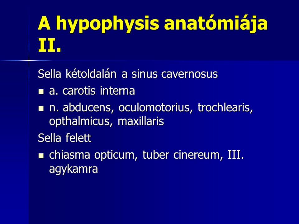 A hypophysis anatómiája II.