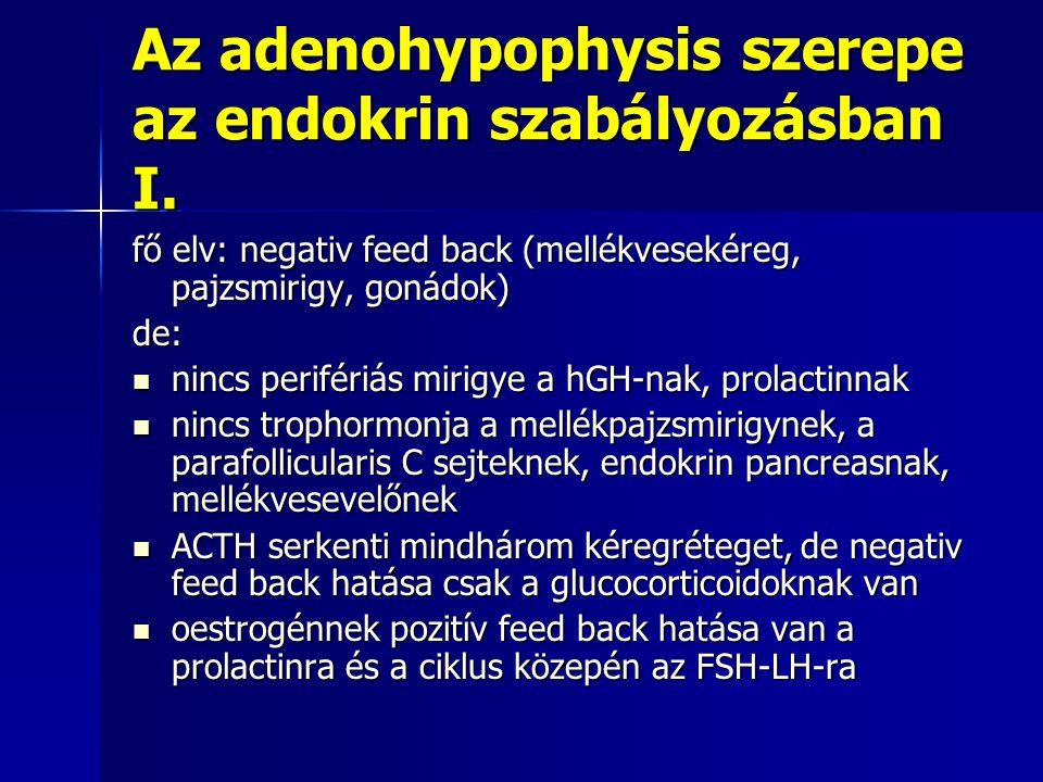 Az adenohypophysis szerepe az endokrin szabályozásban I.