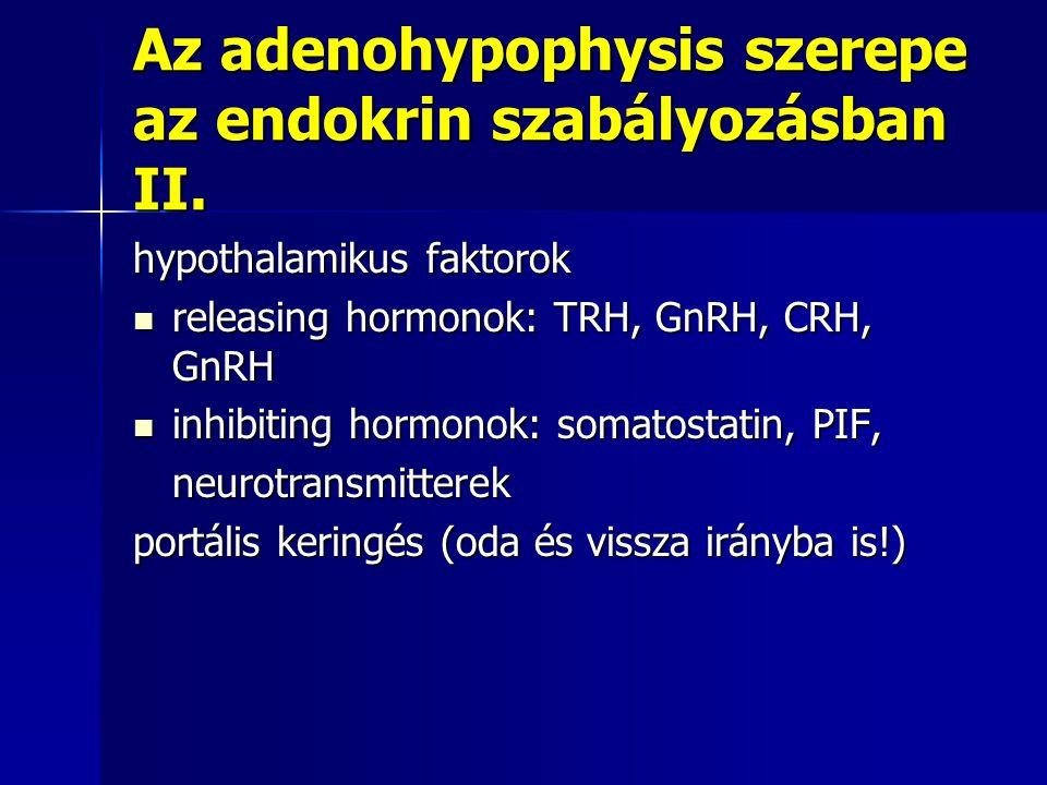Az adenohypophysis szerepe az endokrin szabályozásban II.