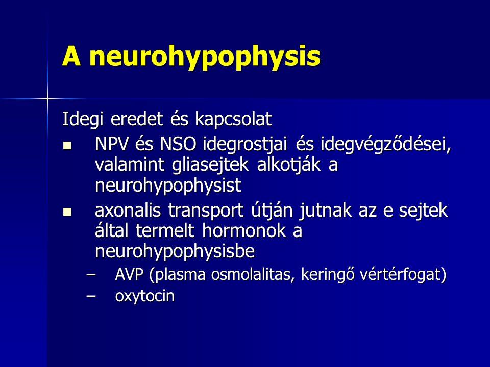 A neurohypophysis Idegi eredet és kapcsolat