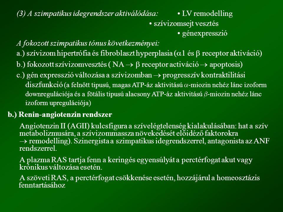 (3) A szimpatikus idegrendszer aktiválódása:. • LV remodelling