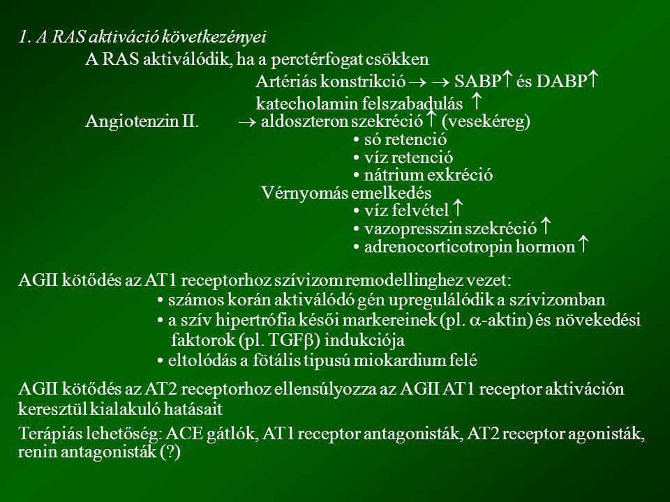 1. A RAS aktiváció következényei