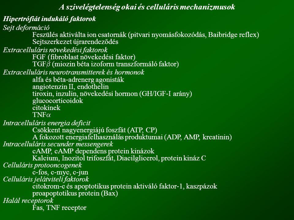 A szivelégtelenség okai és celluláris mechanizmusok