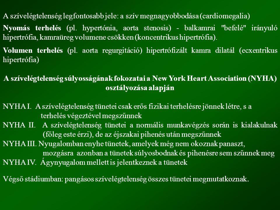 A szívelégtelenség legfontosabb jele: a szív megnagyobbodása (cardiomegalia)