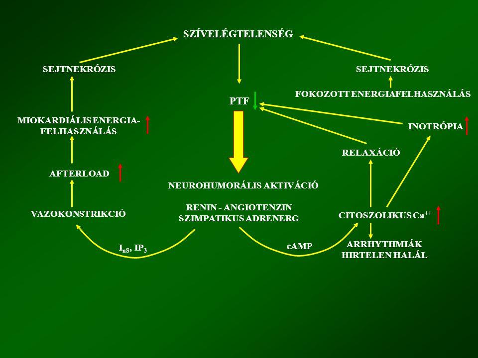 MIOKARDIÁLIS ENERGIA-