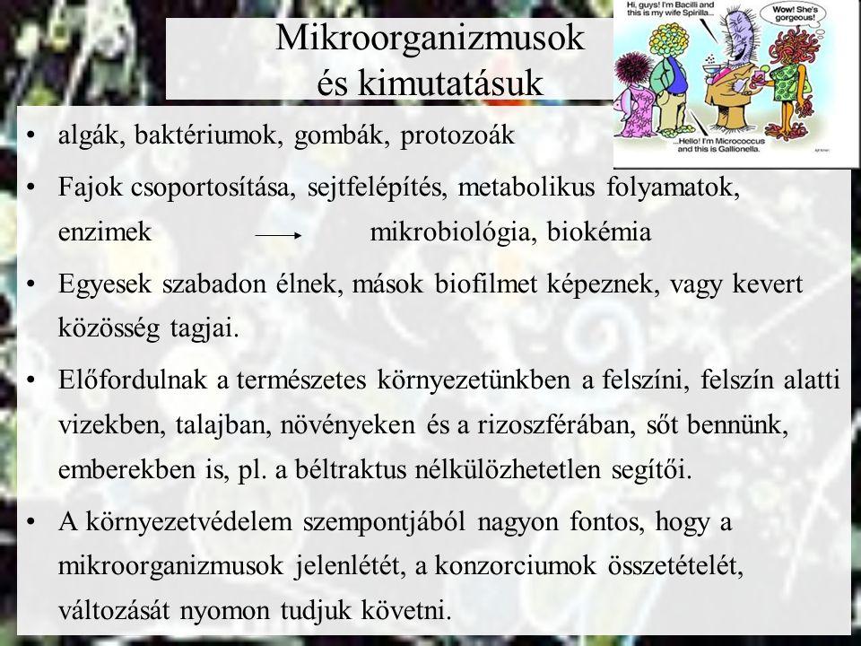 Mikroorganizmusok és kimutatásuk