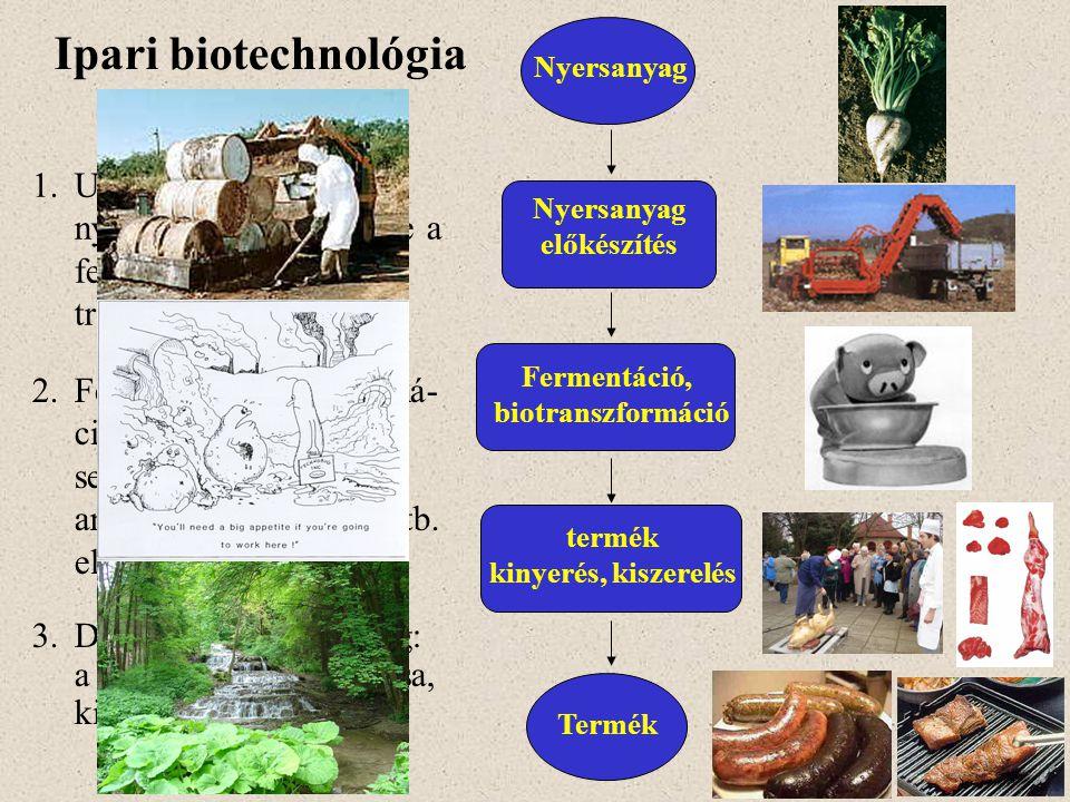 Ipari biotechnológia kulcslépései