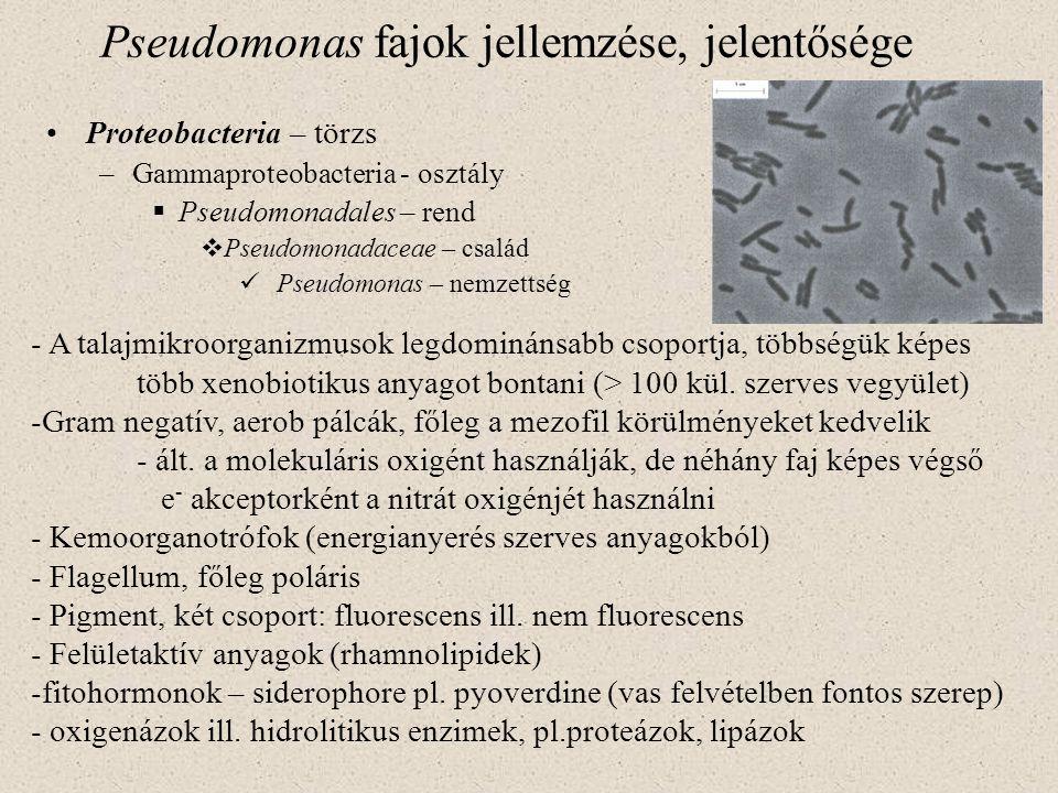 Pseudomonas fajok jellemzése, jelentősége