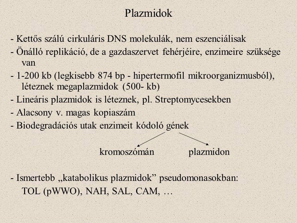 Plazmidok - Kettős szálú cirkuláris DNS molekulák, nem eszenciálisak