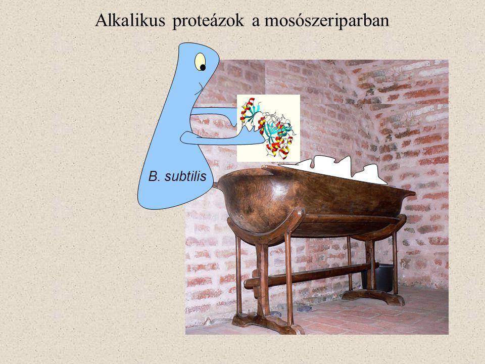 Alkalikus proteázok a mosószeriparban