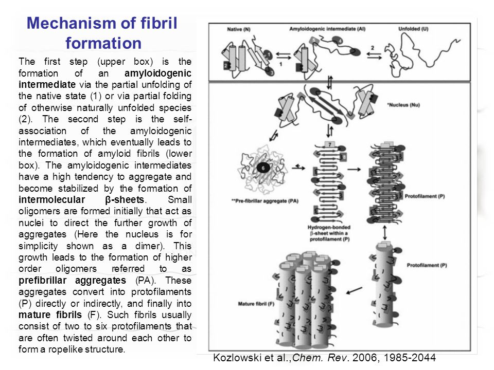 Mechanism of fibril formation