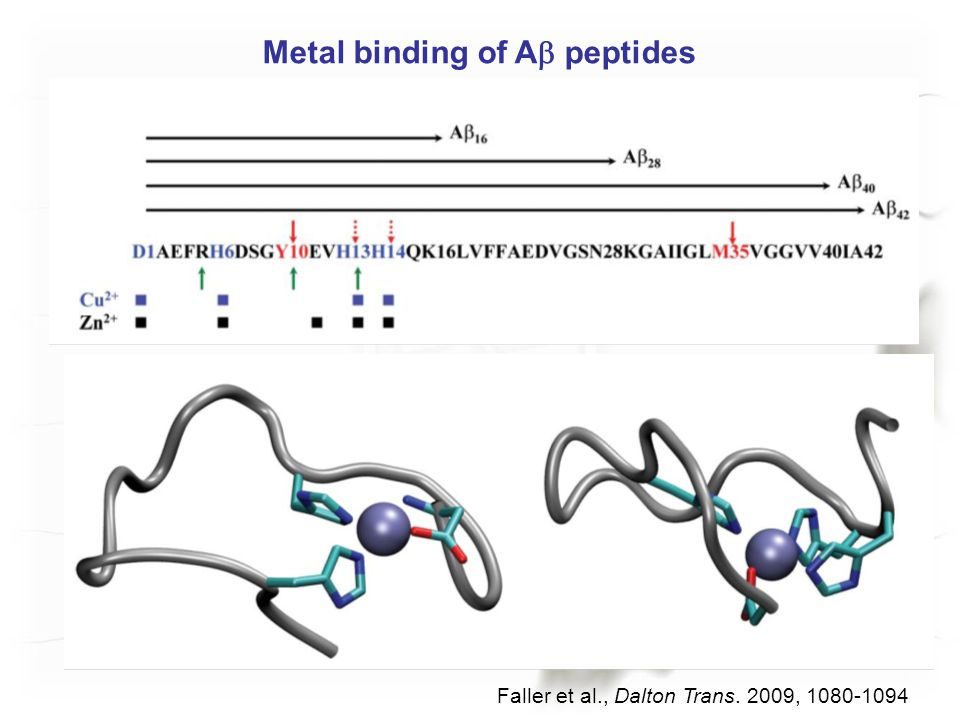 Metal binding of Ab peptides