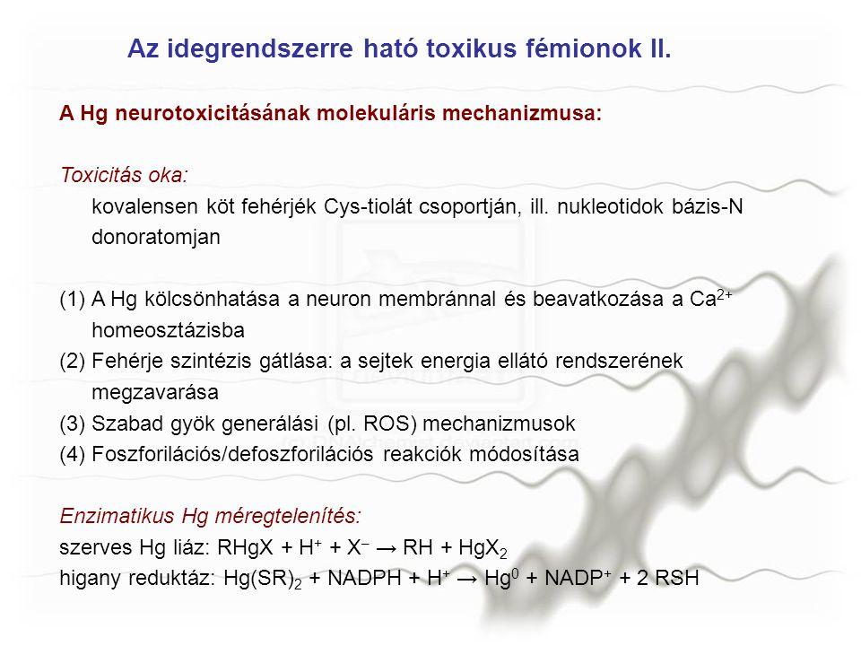 Az idegrendszerre ható toxikus fémionok II.