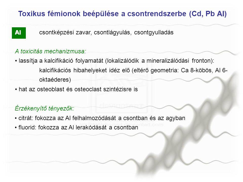 Toxikus fémionok beépülése a csontrendszerbe (Cd, Pb Al)