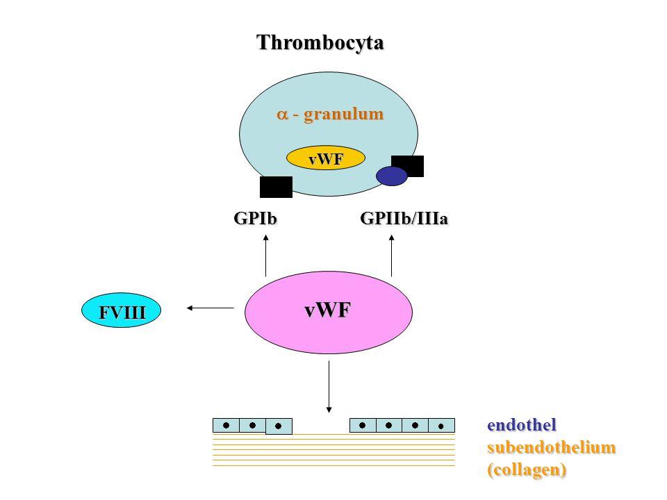 Thrombocyta vWF  - granulum GPIb GPIIb/IIIa FVIII