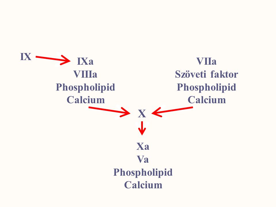 X IX IXa VIIIa Phospholipid Calcium VIIa Szöveti faktor Phospholipid