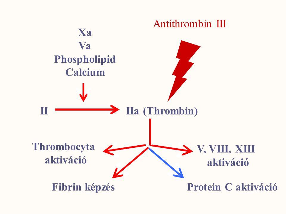 Antithrombin III Xa. Va. Phospholipid. Calcium. II IIa (Thrombin) Thrombocyta. aktiváció. V, VIII, XIII.