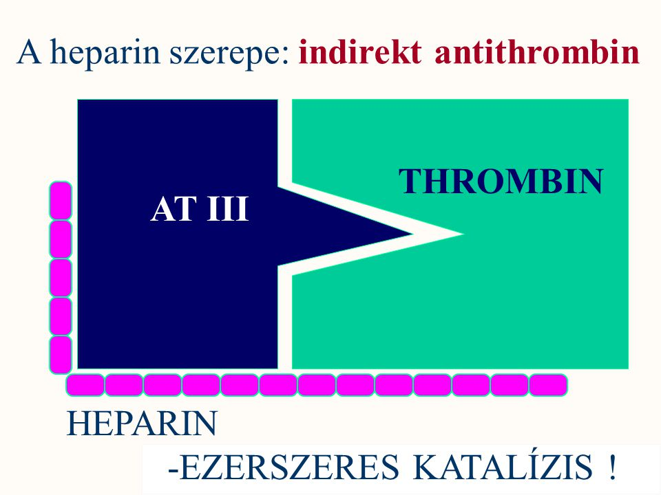A heparin szerepe: indirekt antithrombin