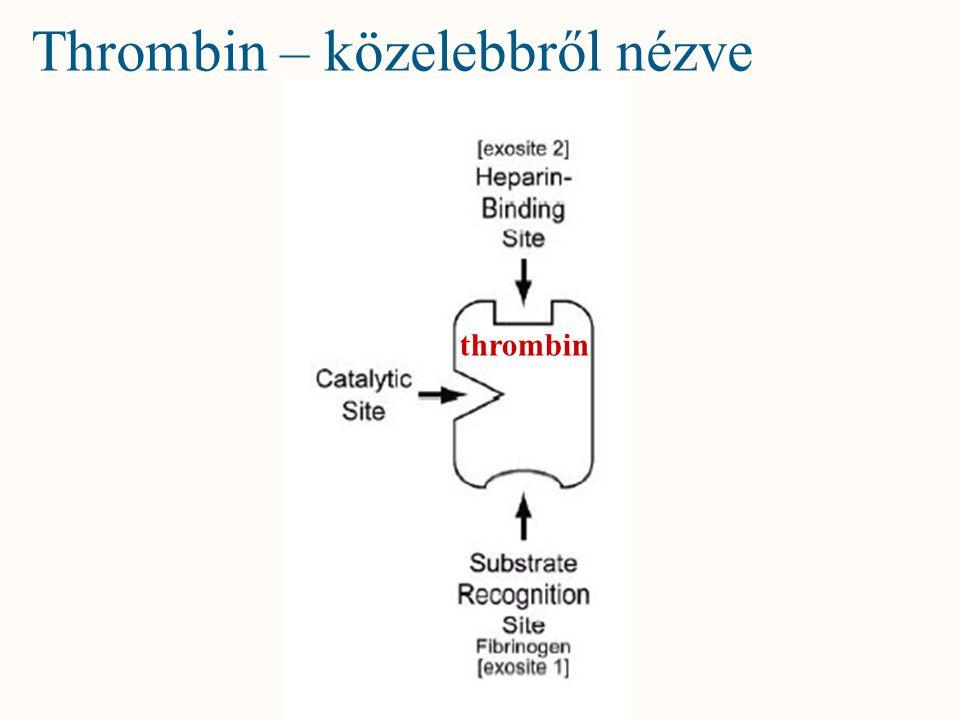 Thrombin – közelebbről nézve