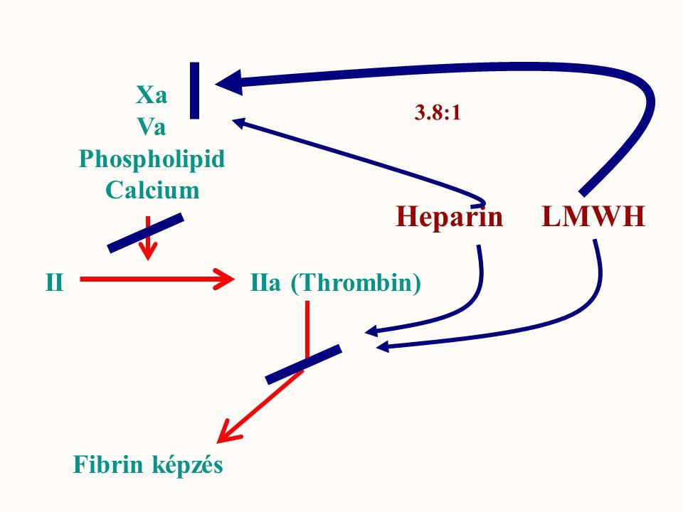 Heparin LMWH Xa Va Phospholipid Calcium II IIa (Thrombin)