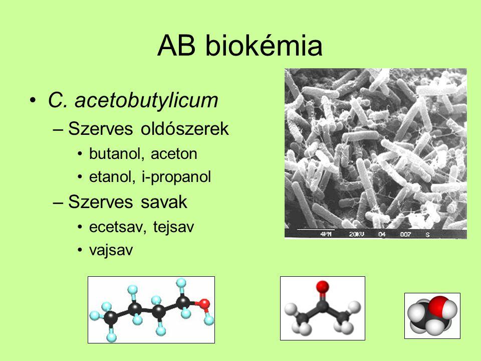 AB biokémia C. acetobutylicum Szerves oldószerek Szerves savak