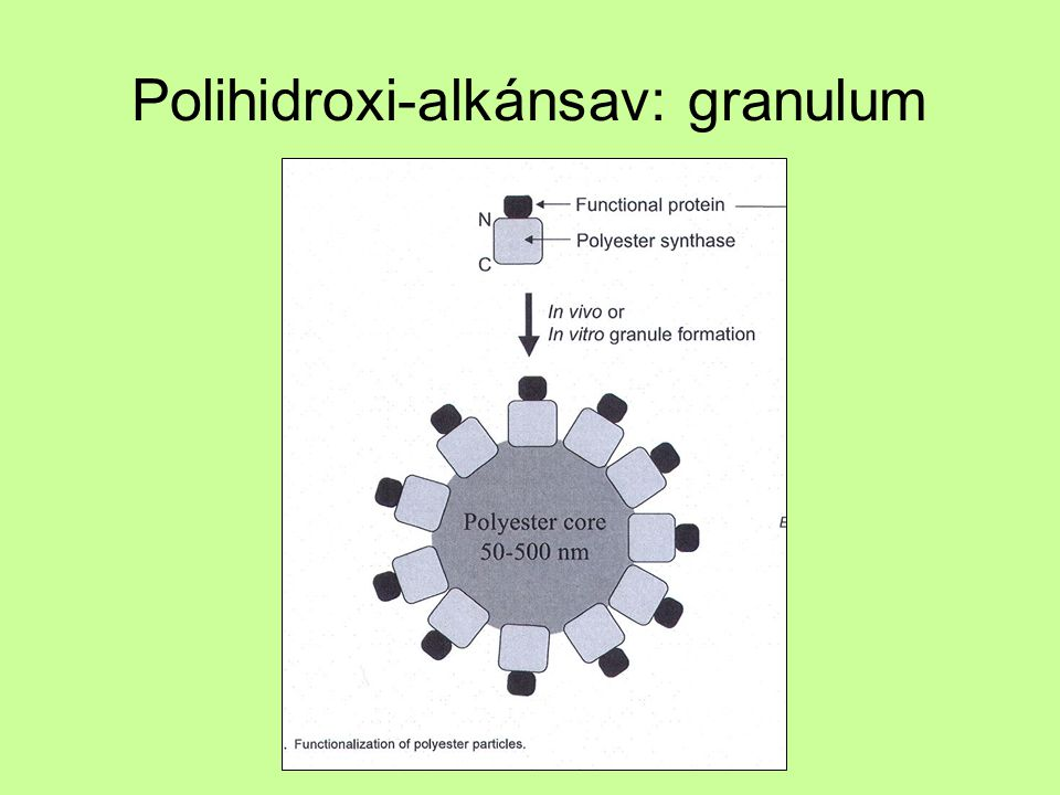 Polihidroxi-alkánsav: granulum
