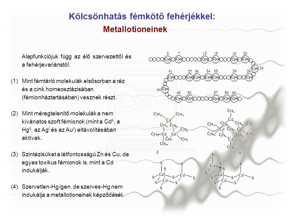 Kölcsönhatás fémkötő fehérjékkel:
