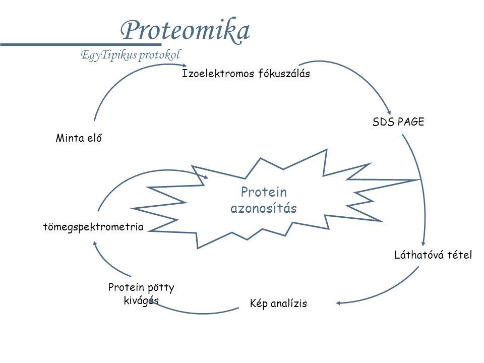 Izoelektromos fókuszálás