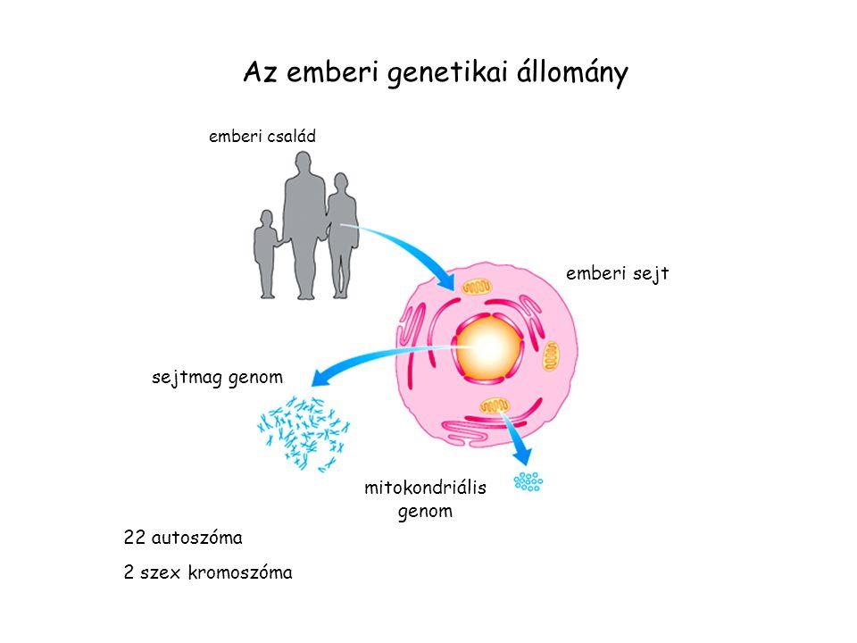 Az emberi genetikai állomány