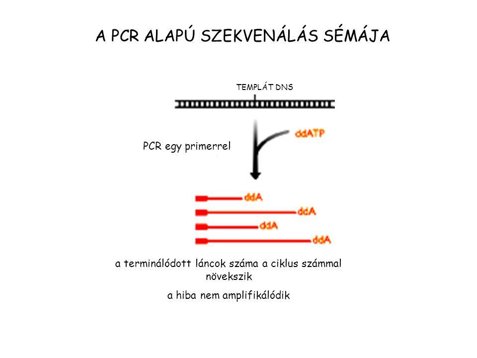 A PCR ALAPÚ SZEKVENÁLÁS SÉMÁJA