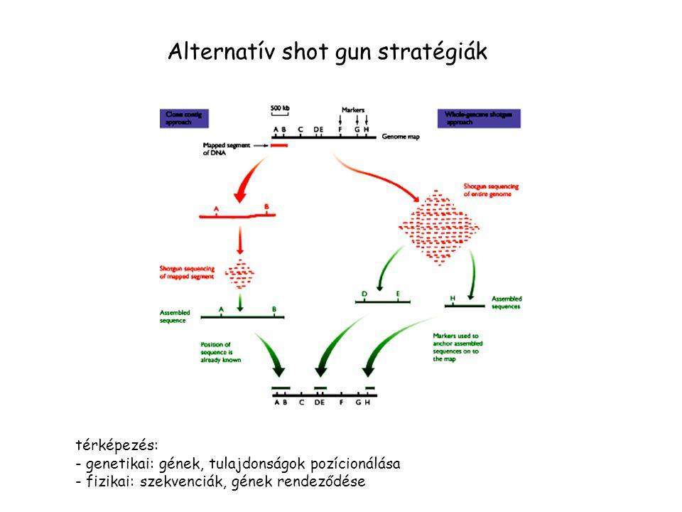 Alternatív shot gun stratégiák