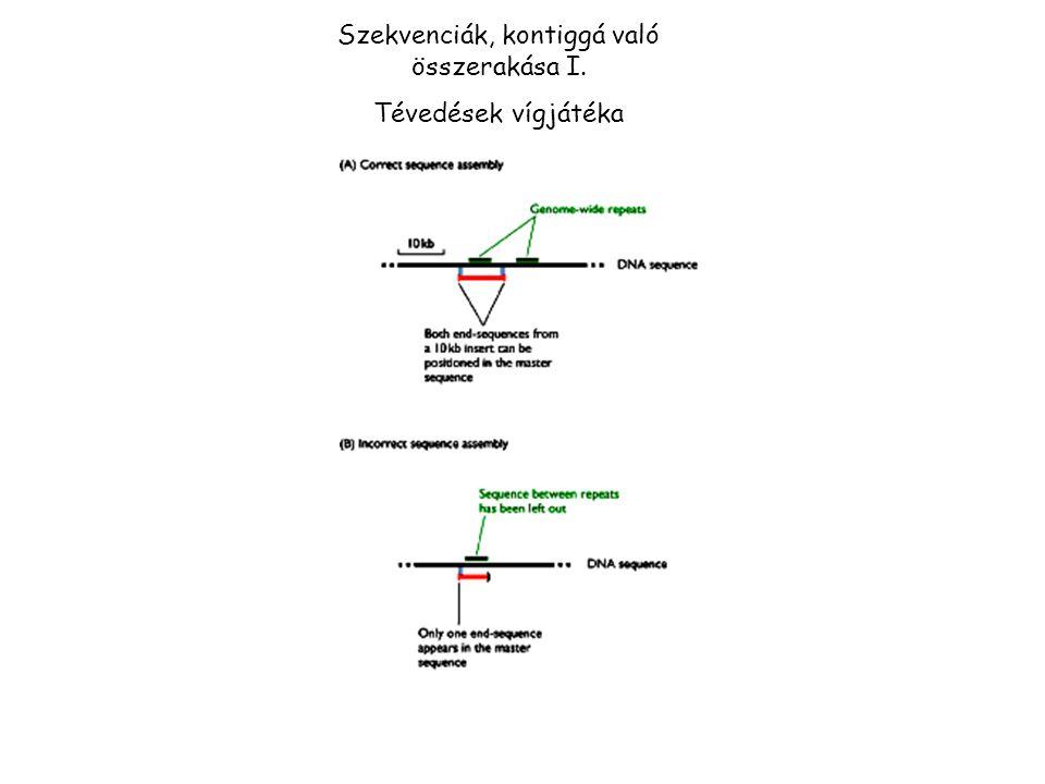 Szekvenciák, kontiggá való összerakása I.