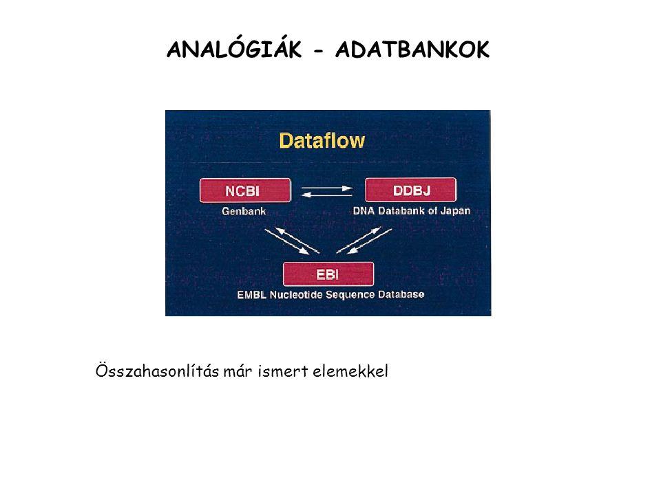 ANALÓGIÁK - ADATBANKOK