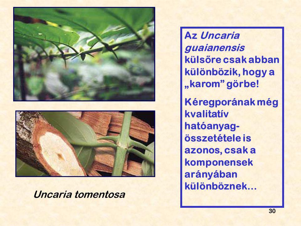 """Az Uncaria guaianensis külsőre csak abban különbözik, hogy a """"karom görbe!"""