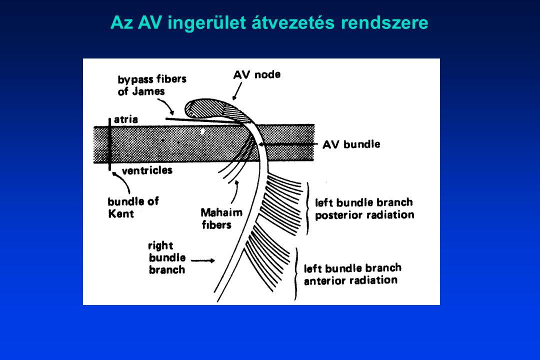 Az AV ingerület átvezetés rendszere