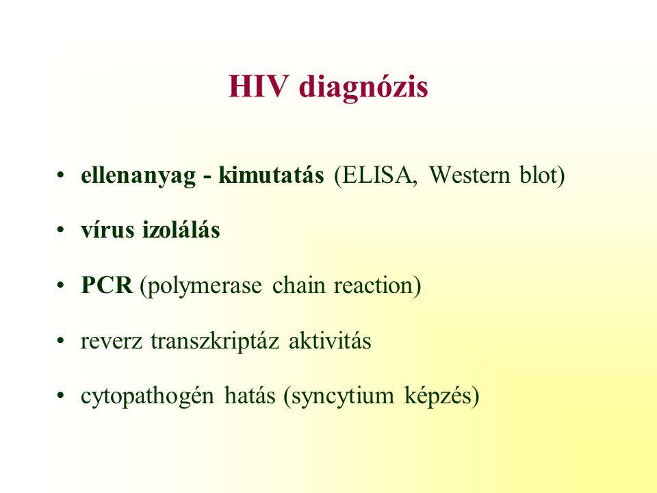 HIV diagnózis ellenanyag - kimutatás (ELISA, Western blot)