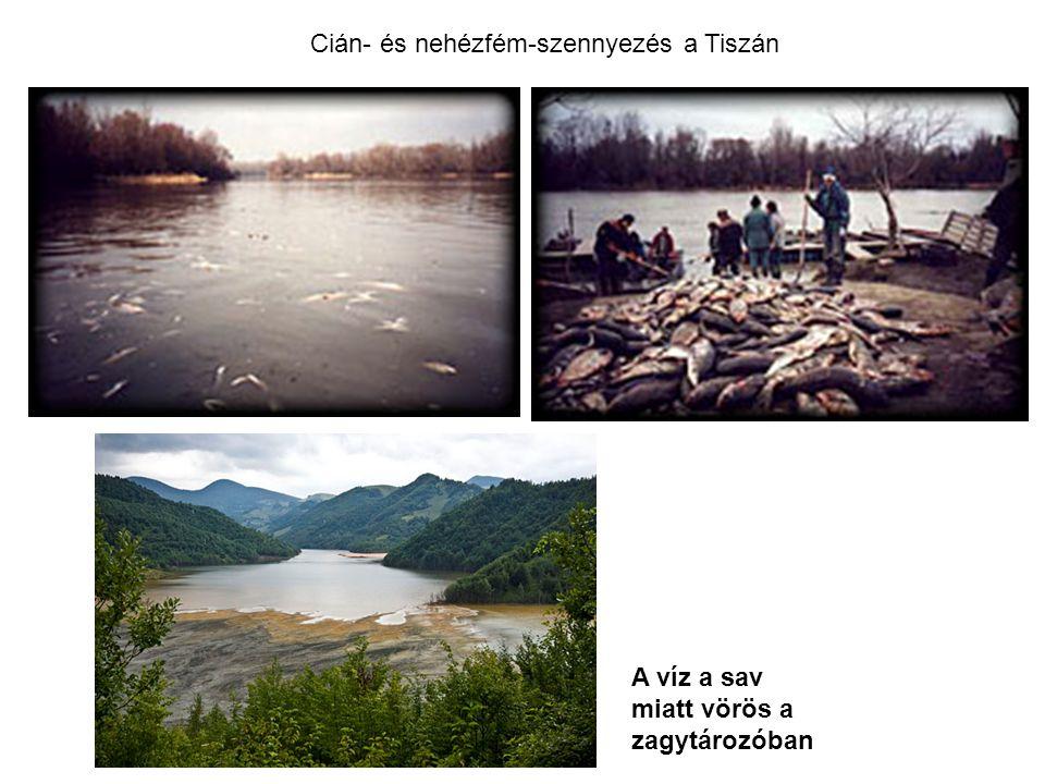 Cián- és nehézfém-szennyezés a Tiszán