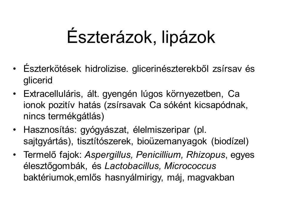 Észterázok, lipázok Észterkötések hidrolizise. glicerinészterekből zsírsav és glicerid.