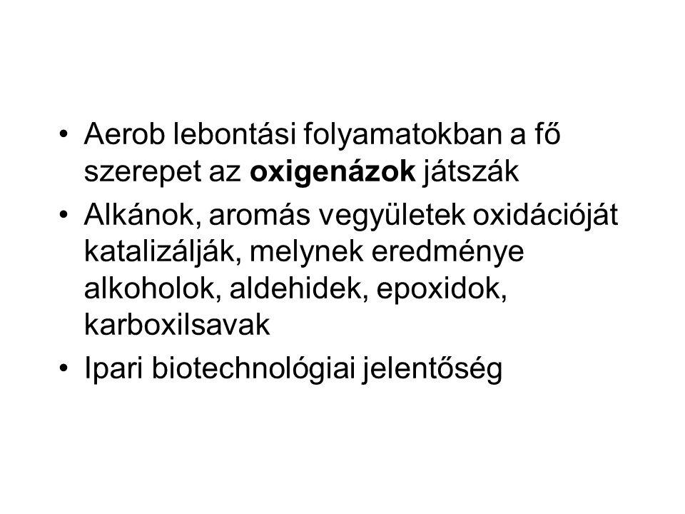 Aerob lebontási folyamatokban a fő szerepet az oxigenázok játszák
