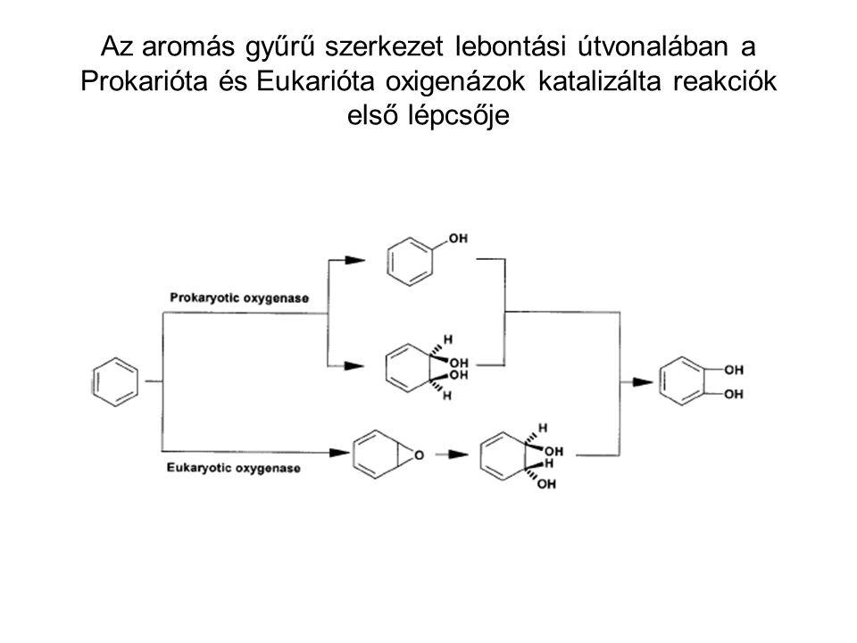 Az aromás gyűrű szerkezet lebontási útvonalában a Prokarióta és Eukarióta oxigenázok katalizálta reakciók első lépcsője