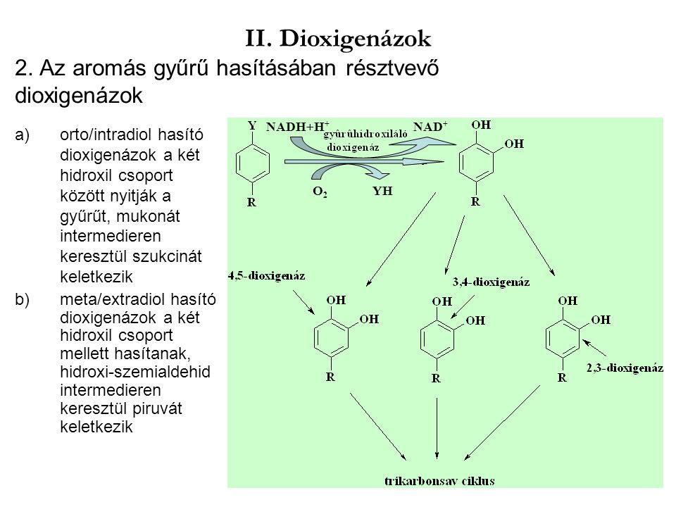 2. Az aromás gyűrű hasításában résztvevő dioxigenázok