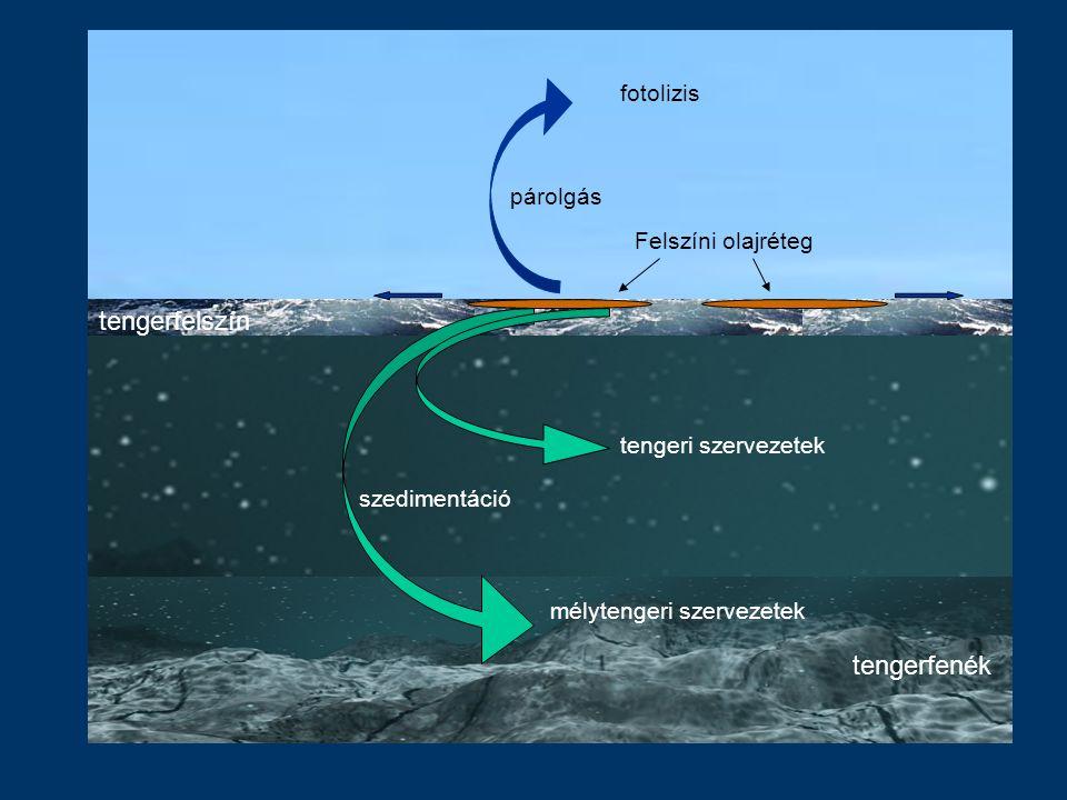 tengerfelszín tengerfenék fotolizis párolgás Felszíni olajréteg