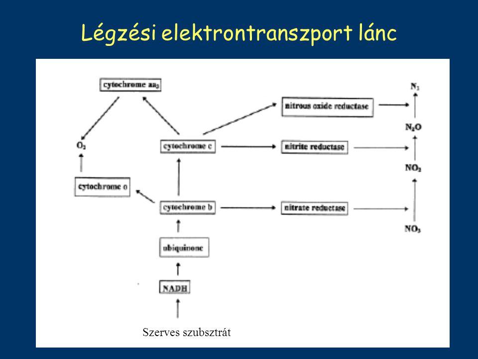 Légzési elektrontranszport lánc