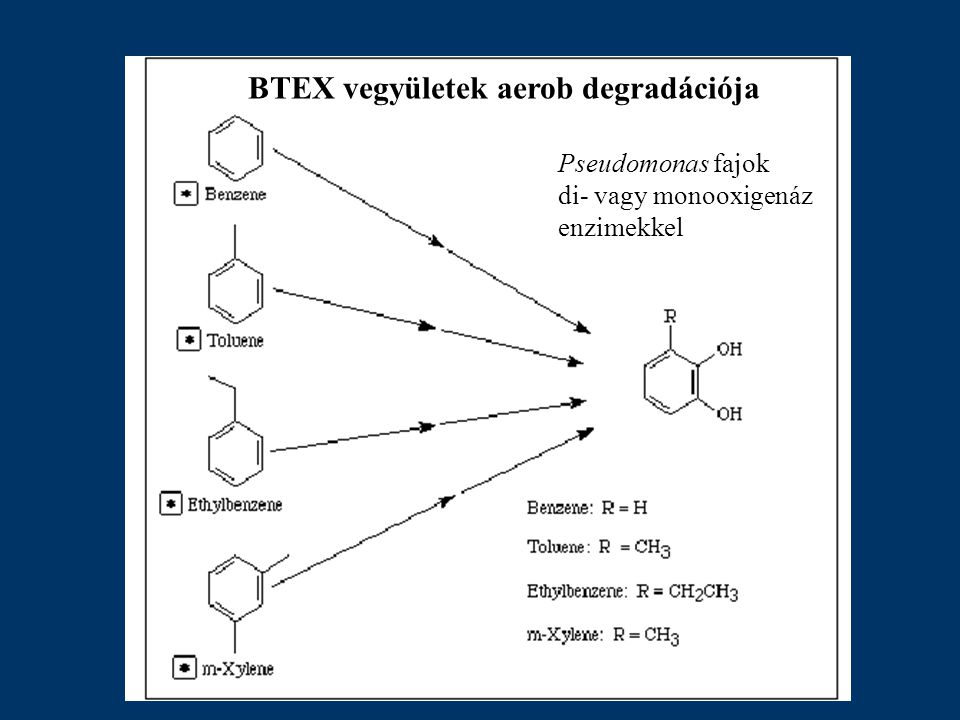 BTEX vegyületek aerob degradációja