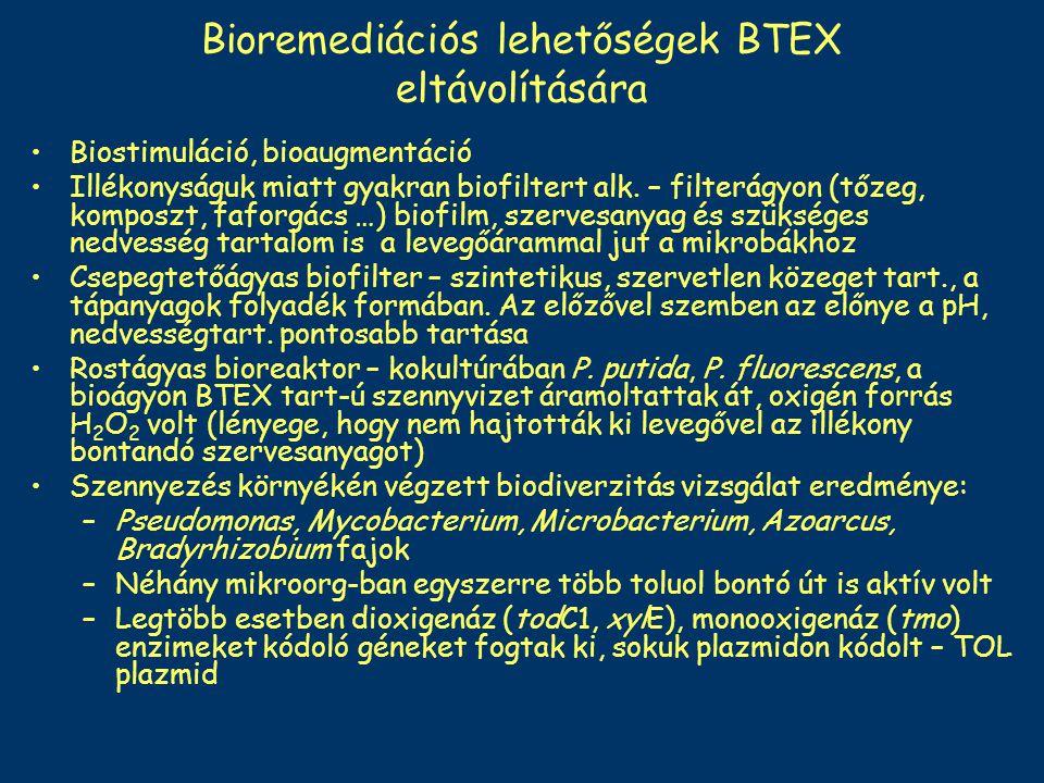 Bioremediációs lehetőségek BTEX eltávolítására
