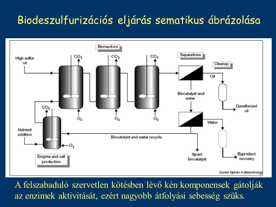 Biodeszulfurizációs eljárás sematikus ábrázolása