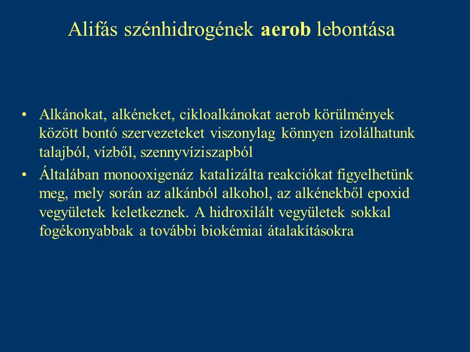 Alifás szénhidrogének aerob lebontása