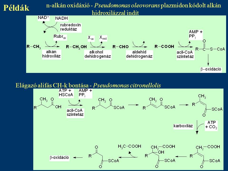 Példák n-alkán oxidáxió - Pseudomonas oleovorans plazmidon kódolt alkán hidroxilázzal indít.