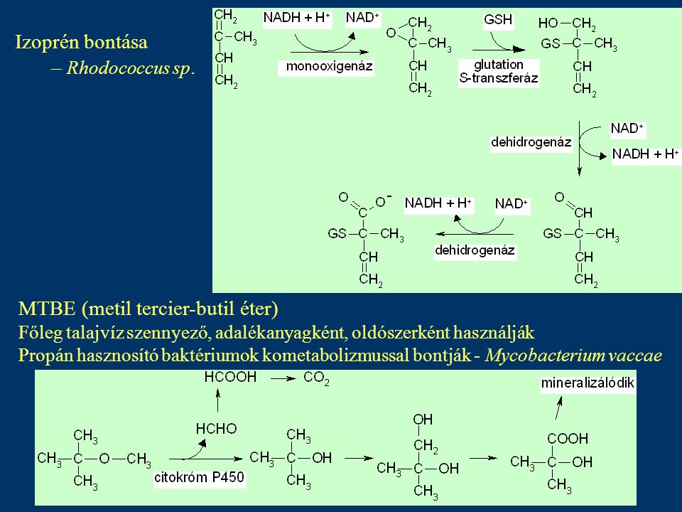 MTBE (metil tercier-butil éter)